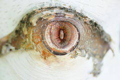Marca natural del árbol de abedul que se asemeja a un ojo humano foto de archivo