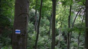 Marca que camina azul en un árbol en el bosque tranquilo, cacerola metrajes