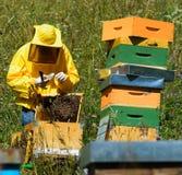 Marcado de la abeja reina Fotos de archivo libres de regalías
