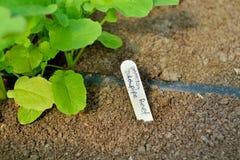 Marcador da identificação de planta Imagem de Stock Royalty Free