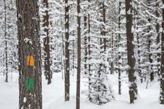 Marcadores da fuga de caminhada em uma árvore em uma floresta do parque nacional de Oulanka foto de stock royalty free