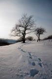 Marcas de la persona que caminan en campo de nieve con el árbol como fondo Fotografía de archivo