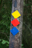 Marcas del rastro en el bosque fotos de archivo libres de regalías