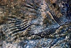 Marcas y textura abstractas Fotografía de archivo libre de regalías