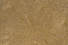 Marcature del granchio della spiaggia Immagine Stock Libera da Diritti