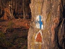Marcature della traccia su un albero Fotografie Stock