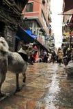 Marché à Katmandou Photo libre de droits