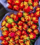 Marché Amsterdam Pays-Bas de fleur de Bloemenmarket de fleurs de tulipes Images stock