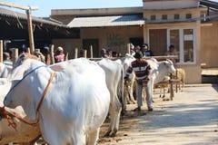 MARCHÉ ANIMAL Photos libres de droits