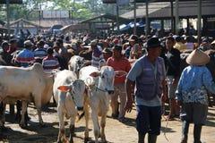 MARCHÉ ANIMAL Photos stock