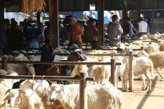 MARCHÉ ANIMAL Image libre de droits