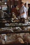 MARCHÉ ANIMAL Images libres de droits