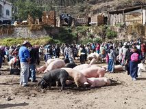 Marché animal en Equateur Images libres de droits
