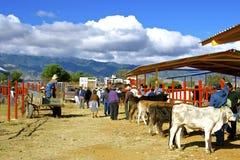 Marché aux bestiaux, Mexique Images libres de droits