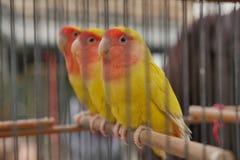 Marché d'oiseau à Paris Photos stock