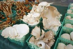 Marché de champignon de couche Photographie stock libre de droits