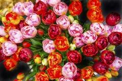 Marché de fantaisie Amsterdam Pays-Bas de fleur de Bloemenmarket de fleurs de tulipes Photographie stock libre de droits