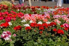 Marché de fleur Images stock