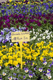 Marché de fleur sur Pâques lundi Images stock