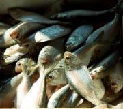 Marché de poissons à Hong Kong Photo stock