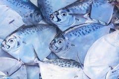 Marché de poissons à Hong Kong Photos stock