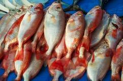 Marché de poissons à Hong Kong Images libres de droits
