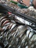 Marché de poissons à Hong Kong Photographie stock