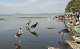 Marché de poissons d'Awasa 2 Images stock