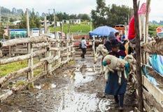 Marché de Saquisili, un de l'Equateur le plus vibrant images libres de droits