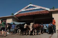 Marché de vache Photographie stock libre de droits