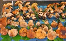 Marché organique de champignon de couche Photo stock