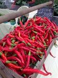 Marché rouge d'agriculteurs de poivrons de Cayenne Image libre de droits