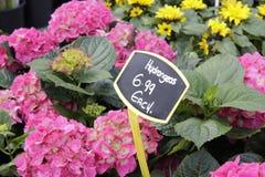 Marché traditionnel de fleur à York photographie stock libre de droits
