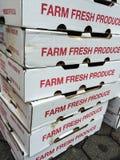 Marché végétarien, boîtes fraîches à aliment biologique de ferme au marché d'agriculteurs photo libre de droits