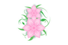 March 8. Flowers, \greeting cards\, \pink flowers\, \flower pattern Royalty Free Stock Image