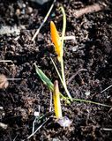 March, the beginning  new of life. It got warmer and the first March flowers began to appear on the flowerbed stock images