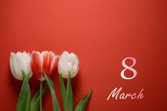 8 march card. Womens day. White tulips on a red background royalty free stock photo