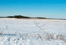 In March on fields snow starts thawing Royalty Free Stock Photography
