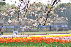 In March,flowers in full bloom in the Mountain Scenic Area at Suzhou,China. Stock Photo