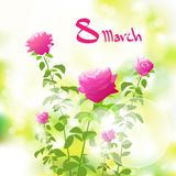 8 march gift card with pink rose over green spring Royalty Free Stock Photo