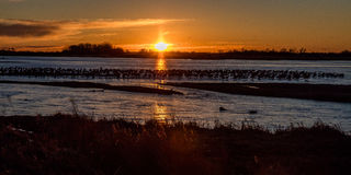 MARCH 8, 2017 - Grand Island, Nebraska -PLATTE RIVER, UNITED STATES Migratory water fowl and Sandhill Cranes are on their spring m Royalty Free Stock Images