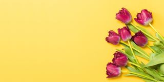 Spring concept. Fresh tulips on yellow background. Copy space stock photo