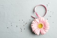 8 March, International Women`s Day. Figure eight of pink ribbon with beautiful gerbera on gray background. Space for text royalty free stock photography