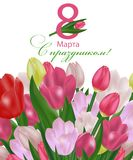 March 8 International Women`s Day greeting card template with flowers. Background with tulips and the text in Russian with the ho. Liday on March 8. Vector Stock Photo
