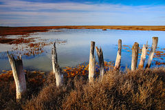 March landscape with old broken fence, summer day with blue water and sky, Camargue, France Stock Photo