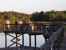 March 08 2015, Miami Florida: Tourists overlook a walking peak into a swamp where many alligators live. Although royalty free stock image