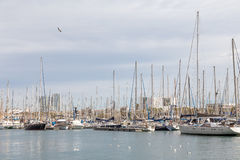5 MARCH 2017. Moored yachts and seaguls in the harbour of Barcel Royalty Free Stock Images