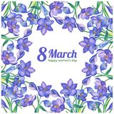 8March. Watercolor illustration with crocus or saffron. On a white background.Spring bouquet of purple flowers.Greeting card for women`s day.Can be used as Royalty Free Stock Photos