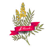 8 march - woman's day. Greeting card with senna flower and a ribbon Royalty Free Stock Photography