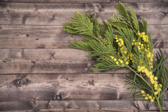 March 8, woman's holiday!. Branch of mimosa on a wooden boards background for valentines day Stock Photography